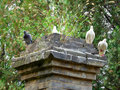 The pagoda forest in shaolin temple china s largest existing architecture with pigeons standing on it inside songshan dengfeng Royalty Free Stock Photos