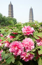 Pagodas and peonies Stock Images
