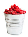 A pail full of freshly picked raspberry vertical format isolated on white background Stock Photos