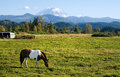 Paint Horse and Mount Rainier Stock Photos