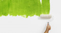 Paint roller hand painting green color isolated on blank wall Royalty Free Stock Photo