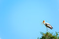 Paintd stork a painted perching in its nest in the treetops Stock Photos