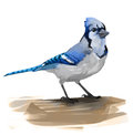 Painted blue jay digital painting of a Stock Image