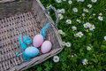 Painted easter eggs with feathering in wicker basket cute on the grass Stock Image