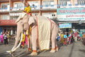 Painted elephant Royalty Free Stock Photo