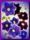 Painted flowers blue on white paper Royalty Free Stock Photography