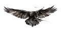 Painted flying bird on white background Royalty Free Stock Photo