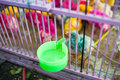 Painted live chickens in a cage for sale at a market in Java, Indonesia Royalty Free Stock Photo