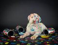 Painted Pooch Royalty Free Stock Photography