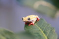 Painted Reed Frog or Spoted Tree Frog Royalty Free Stock Photo