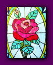 Painted rose pink in purple frame Royalty Free Stock Photos