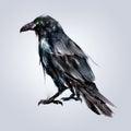 Painted sitting bird Raven back Royalty Free Stock Photo