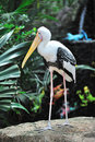 Painted stork Royalty Free Stock Images