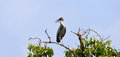 Painted stork on a branch tree Royalty Free Stock Photos