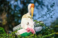 Painted stork a perched in the treetops preening its feathers Royalty Free Stock Images