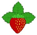 Painted strawberry with leaves vector Royalty Free Stock Photos