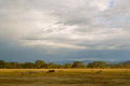 Painterly african landscape kenya with wildlife zebras etc overcast but detailed sky late afternoon line of trees and small hills Royalty Free Stock Photography