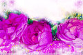Painting art watercolor illustration pink,violet color of the roses.