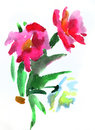 Painting flowers watercolour peony impression Royalty Free Stock Images