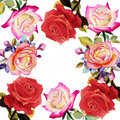 Painting red pink and orange color of roses flowers.