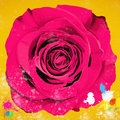 Painting of single rose Royalty Free Stock Photos