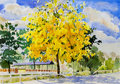 Painting watercolor landscape yellow color of golden tree flower Royalty Free Stock Photo