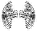 Pair of Angel or Eagle Wings