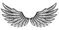 Pair of Bird Wings