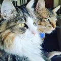 Pair of cats looking at the window