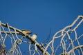 Squabbling Birds Royalty Free Stock Photo