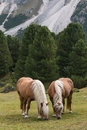 Pair of chestnut horses grazing Royalty Free Stock Photo