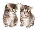 Pair of cute fluffy kittens.