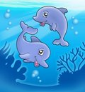 Pair of cute playing dolphins Royalty Free Stock Photo
