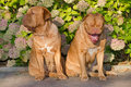 Pair of dogs against floral background Stock Image