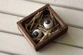 Pair of eyeballs eyeball in a box Royalty Free Stock Images