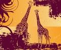Pair of giraffe Royalty Free Stock Photo