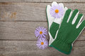 Pair of gloves and flowers on wooden table with copy space Stock Image