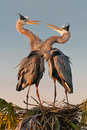 Pair of herons Royalty Free Stock Photo