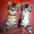 Algunos de gatitos