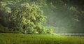 A pair of old trees on the lake photo taken near pasarea monastery romania Stock Photography