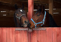 Pair Race Horses In Wooden Sta...