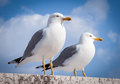 Pair of seagull seagulls perched on a low wall marble Stock Photo