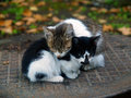Pair of small cats Stock Images