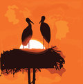 Pair of storks silhouettes in the nest on sunrise