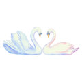 Pair of swans vector watercolor Stock Photo