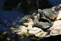 A pair of turtle in a zoo in Protaras