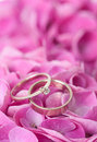 Pair wedding rings flowers petals pink hydrangea close up macro Royalty Free Stock Photo