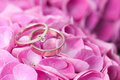 Pair wedding rings flowers petals pink hydrangea close up macro Stock Photo