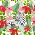 A pair of white tigers and flowers romantic Royalty Free Stock Photography