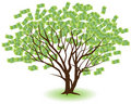 Paired Money Trees Royalty Free Stock Photography
